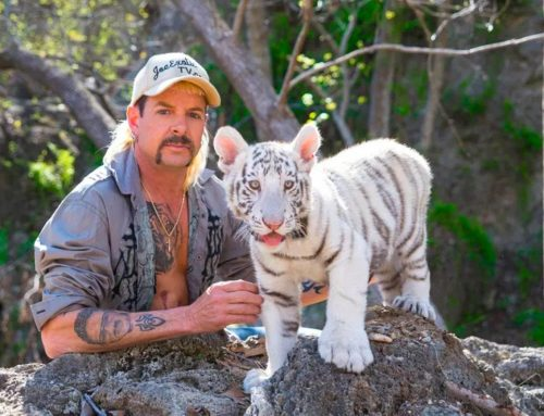 Tiger King Quiz: How Many Questions Can You Get Right About The Series?